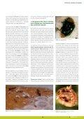 Dossier tècnic núm. 36: Cítrics (II). Control de plagues, en ... - RuralCat - Page 5