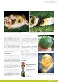 Dossier tècnic núm. 36: Cítrics (II). Control de plagues, en ... - RuralCat - Page 7
