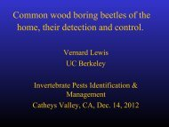 UC Research Update on Wood-boring Beetles