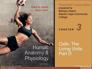 Cells: The Living Units: Part D - next2eden.net