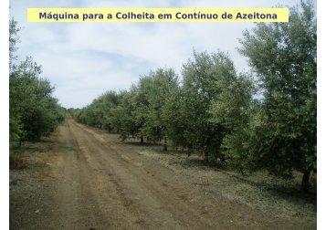 Máquina para a Colheita em Contínuo de Azeitona - António ... - icaam