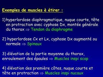 Exemples de muscles è étirer