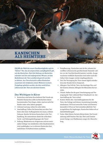 Kaninchen als heimtiere - Starke Pfoten