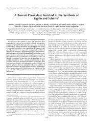 A Tomato Peroxidase Involved in the Synthesis of ... - Plant Physiology