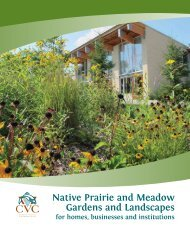 Native Prairie and Meadow Gardens and Landscapes for Homes ...
