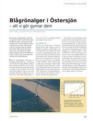 Blågrönalger i Östersjön - Havet.nu