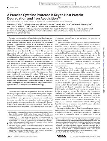 A Parasite Cysteine Protease Is Key to Host Protein Degradation ...
