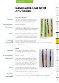 Pasture Diseases - Agriseeds Pasture Site - Page 5