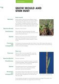 Pasture Diseases - Agriseeds Pasture Site - Page 6
