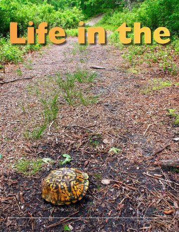 wj-turtles