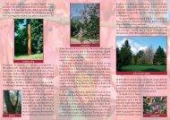 A sárvári arborétum - Őrségi Nemzeti Park