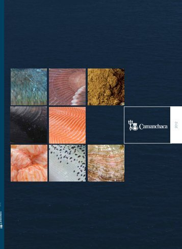 2012 Annual Report (Free and edited translation) - Camanchaca