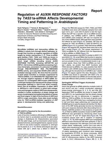 Report Regulation of AUXIN RESPONSE FACTOR3 by TAS3 ta ...