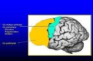 Aucun titre de diapositive - Institut des Sciences cognitives