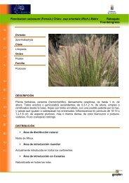 Pennisetum setaceum (Forssk.) Chiov. ssp ... - Interreg Bionatura