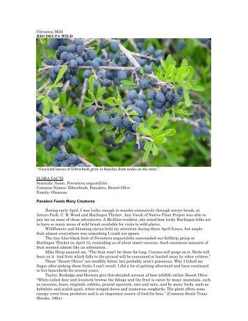"""Forestiera angustifolia.pdf - Christina Mild's """"Rio Delta Wild"""""""