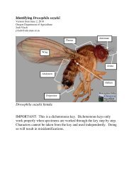 Identifying Drosophila suzukii - State of Oregon