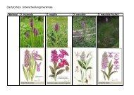 Dactylorhiza Unterscheidungsmerkmale - BUND Konstanz