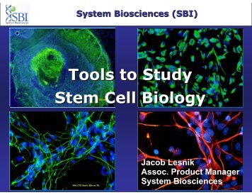 Tools to Study Stem Cell Biology - System Biosciences