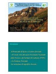 -Il Protocollo di Kyoto e il settore forestale - Il Veneto visto dal nuovo ...