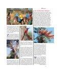 Eindrücke von einer Reise zu den Papageien in Äthiopien - Page 4