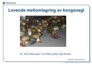 Levende mellomlagring av kongesnegl - BluePlanet AS