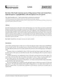 Zootaxa, Revision of the South American species of Hagenulopsis ...