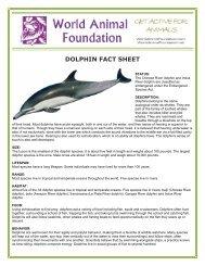 DOLPHIN FACT SHEET - World Animal Foundation