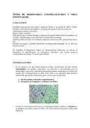 herpesvirus: citomegalovirus y virus epstein-barr - micromadrid