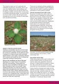 Silverleaf Whitefly Management - Page 2