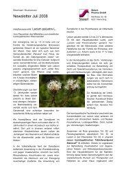 Ledum palustre - Steierl-Pharma GmbH