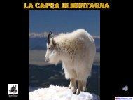 La Capra di Montagna - Naturalmente