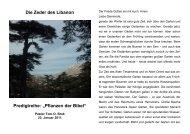 Die Zeder des Libanon