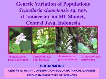 Genetic Variation of Populations Scutellaria slametensis sp. nov ...