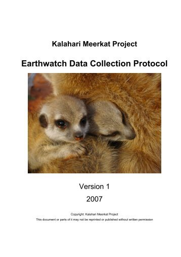 Amazon.com : Design Toscano Kalahari Meerkat Statues: Out of Hole ...