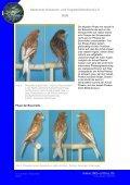 Phae(n)omenal - Deutscher Kanarien- und Vogelzüchter-Bund e.V. - Seite 2