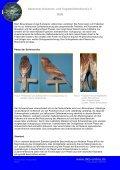 Phae(n)omenal - Deutscher Kanarien- und Vogelzüchter-Bund e.V. - Seite 3