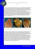Phae(n)omenal - Deutscher Kanarien- und Vogelzüchter-Bund e.V. - Seite 4