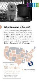 Canine Influenza   Dog Flu - Page 2