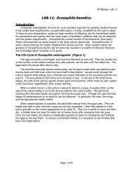 LAB 11: Drosophila Genetics
