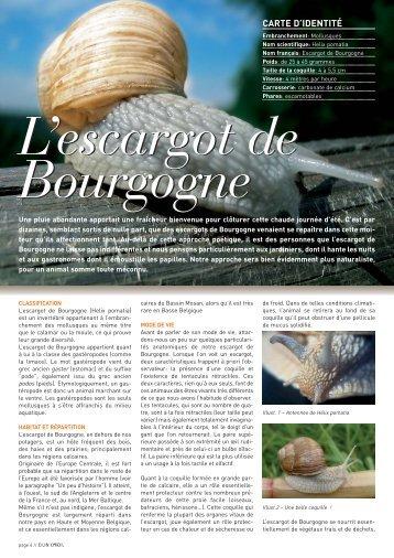 L'escargot de Bourgogne - Natagora