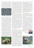 L'escargot de Bourgogne - Natagora - Page 2