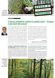 Il bosco protettivo contro la caduta sassi – il legno è più duro del ...
