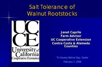Salt Tolerance of Walnut Rootstocks - Kings County