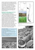 Solitary seagrass meadow in Chile supports a unique ... - Bedim - Page 4