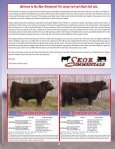 SKOR Simmental Bull Sale - Transcon Livestock Corporation - Page 3