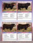 SKOR Simmental Bull Sale - Transcon Livestock Corporation - Page 5