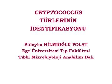 Cryptococcus Türlerinin İdentifikasyonu