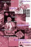 Guida per lo studente - La Sapienza - Page 5