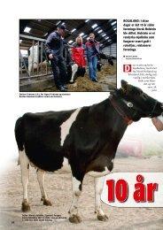 I disse dager er det 10 år siden foreninga Norsk ... - Dansk Holstein